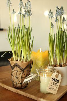 Flores de primavera y velas - Spring flowers and candles