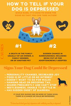 How To Tell If Your Dog Is Depressed, and what to do about it! By Rebecca Sanchez, The Pet Lifestyle Guru at MattieDog