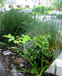 Retrofitting with Green Infrastructure – THE DIRT