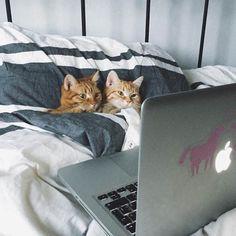 パソコンをいっしょに見る猫