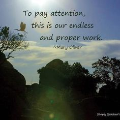 To pay attention, this is our endless and proper work. ~Mary Oliver  - From http://www.simplyspiritualliving.org/simply/to-pay-attention-this-is-our-endless-and-proper-work/