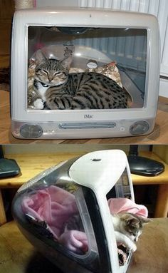 Broken iMacs transformed into beds for cats.