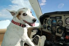 "What happened to ""dog is copilot?"" This dog is clearly in the pilot seat!"