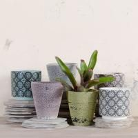 Drum planters and Orchid pots