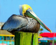 Pelican - 2 have sold.