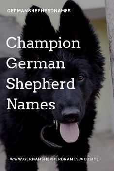 Visit to view the list of champion german shepherd names.