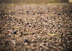 Profondità di Campo | Depth of Field