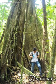 Recorridos en la selva Lacandona | Los árboles más antiguos que conserva este lugar son sumamente altos.  Lacandona Jungle in Chiapas México.  www.kefdaviajero.com   #travel #kefdaviajero #viajes #travelguide #destinos #mexiko #mexique #mexicoenfotos #