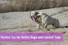 Perfect Toy for Active Dogs and Limited Time - COLLAR Puller Dog Training Toy I started Christmas shopping for the dogs. We have 3 packages already and 2 sets of Puller dog toys. Yes, I'm psychotic about these toys. When I was shopping, I noticed a few knock offs and thought I'd do a comparison. SPOILER ALERT! Nothing compares! http://www.keepthetailwagging.com/what-is-the-best-toss-fetch-and-tug-toy-for-dogs/
