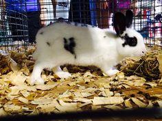 Bunny at fair