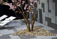 #Cherry #blossom in a #Japanese #courtyard