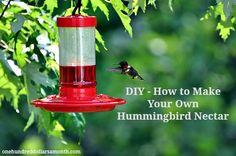 make your own hummingbird nectar