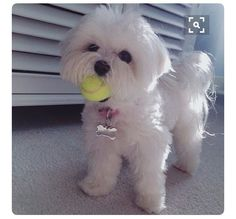 Tennis Anyone?!? ♛BOUTIQUE CHIC♛