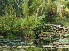 For an educational day-drip out of Vero Beach, try McKee Botanical Garden, an 18-acre historic subtropical garden maintained by a private no...
