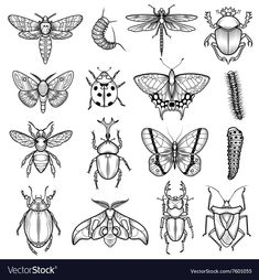 Insects black white line icons set with dragonfly and caterpillar flat isolated vector illustration , Insect Tattoo, Bug Tattoo, Snail Tattoo, Beetle Tattoo, Flash Art Tattoos, Tattoo Sketches, Tattoo Drawings, Art Drawings, Insect Art