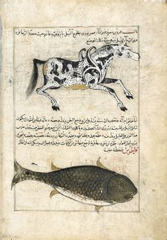 Water Horse (Faras al-Ma), Whale (Qatus), from Ajaib al-makhluqat (Wonders of Creation) by al-Qazvini. Iraq or Eastern Turkey, early 15th century. (via Arts of the Islamic World, Smithsonian)