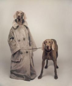 William Weggman and his Weimaraner photography. He be famous in the 90's and a part of my childhood on Sesame Street.