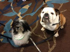 @CosmoHavanese I posted our pic together on my new #blogpaws #Pinterest page