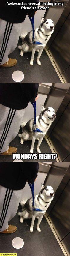 Awkward conversation dog…