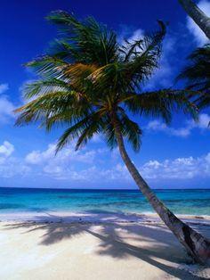 A Palm Tree Bends to the Caribbean Sea on a Key in the San Blas Islands, San Blas, Panama Photographic Print