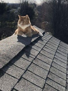 141 best funny cat poses images  cats crazy cats cute cats