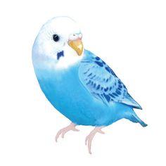 Blue Budgie, Blue Parakeet, Parrot Drawing, Parrot Painting, Bird Drawings, Cute Drawings, Mini Canvas Art, Park Art, Guache