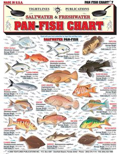 Hi, let this year be one of inner peace and stable financial goals realized. Fishing Rigs, Fishing Guide, Fly Fishing, Fishing Stuff, Vermillion Snapper, Fish Chart, Aquarium Design, Types Of Fish, Financial Goals