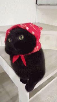 Babushka Black Cat