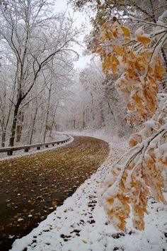 Blue Ridge Parkway near Asheville NC after a fall snow 2014