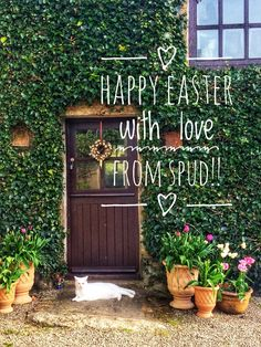 Spud teh Ednovean Farm Hospitality cat at Easter West Cornwall, Farm Gardens, Happy Easter, Hospitality, Cat, Spring, Happy Easter Day, Cat Breeds, Cats