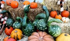 Fall Colors And Produce – Tuesday's Daily Jigsaw Puzzle