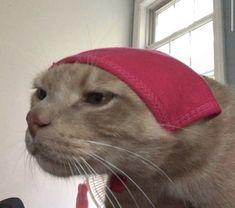 Cabello Animal Crossing, Cute Baby Animals, Funny Animals, Sad Cat, Cat Aesthetic, Animal Jokes, Cute Memes, Animals Images, Crazy Cats