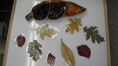 laminated leaves on a light table