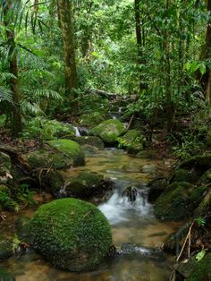 we want a river to be incorporated in the jungle setting
