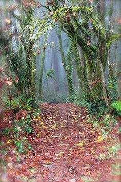 The Fairy Path, Memorial Park in Wilsonville, OR I run or walk through this path every day.  I feel so blessed to live in Wilsonville around such beauty!