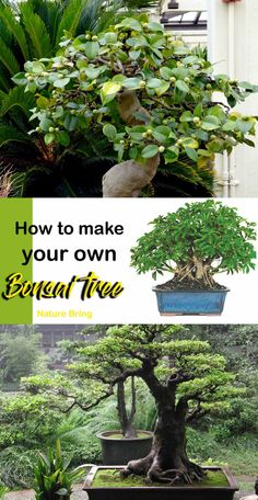 Bonsai is generally a tree or plant that has actually been kept smaller sized than its typical size. The technique to making a bonsai plant is to frequently prune the tree every spring Bonsai Indoor, Outdoor Bonsai Tree, Buy Bonsai Tree, Bonsai Tree Care, Bonsai Tree Types, Bonsai Plants, Bonsai Garden, Indoor Plants, Indoor Gardening