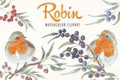 watercolor robin bird clipart - Illustrations - 3