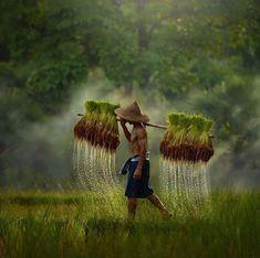 Rice field farmer ~ Thailand