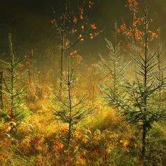 Photo Magical light by **  REgiNA  **  on 500px