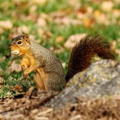 Minimize the impact squirrels and chipmunks can have on your yard with these tips.