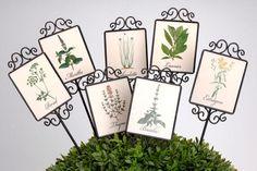 Des piques aromatiques à planter dans son jardin ou sa terrasse.  ©  Amadeus