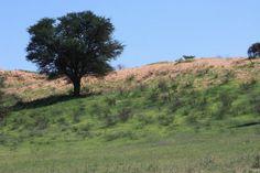 Red dune.