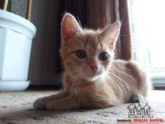 Karmelka is looking for a home  #cute #cutecats #cats #caturday #kot #koty #neko #gato #katz #katzen #kittens #chat