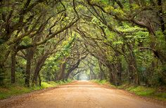 Botany Bay Road - Edisto Island, SC--Botany Bay is an incredibly beautiful plantation located just south of Charleston on the Atlantic Coast of Edisto Island, SC. The road in is just amazing as it passes through these old twisted plantation oaks that are covered in a blanket of spanish moss and entangled vines.