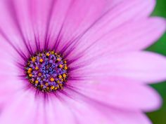 Wallpapers Purple Flowers Hq Macro 1600x1200 |