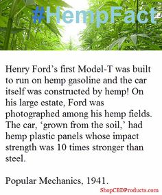 #hempFact  Henry Ford's first Model-T was built to run on hemp gasoline and the CAR ITSELF WAS CONTRUCTED FROM HEMP! On his large estate, Ford was photographed among his hemp fields. The car, 'grown from the soil,' had hemp plastic panels whose impact strength was 10 times stronger than steel; Popular Mechanics, 1941.