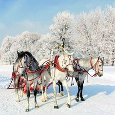 A troika of Christmas horses pulling sleigh All The Pretty Horses, Beautiful Horses, Animals Beautiful, Cute Animals, Winter Szenen, Christmas Horses, Snow Scenes, Winter Beauty, Horse Love