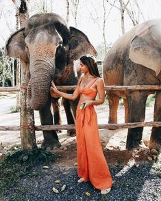 Where You Should Go For Spring Break Based On Your Zodiac Sign, Let's change up the spring break destinations by matching them with you. Here are a list of all zodiac signs and their respective spring break possi. Photo Elephant, Elephant Zoo, Adventure Awaits, Adventure Travel, Paises Da Africa, Mode Pop, Summer Vibe, Look Boho, Wanderlust Travel