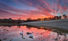 Nice weather... for swans: Streets are turned to lakes and commuters face miserable return to work after the Christmas holidays as the stormy weather wreaks havoc on road and rail