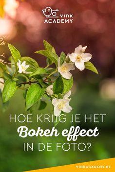 Wat is bokeh en hoe krijg je het bokeh effect in de foto? Bokeh Effect, Love Photography, Just Love, Passion, Tips, Plants, Ideas, Pictures, Fashion Photography